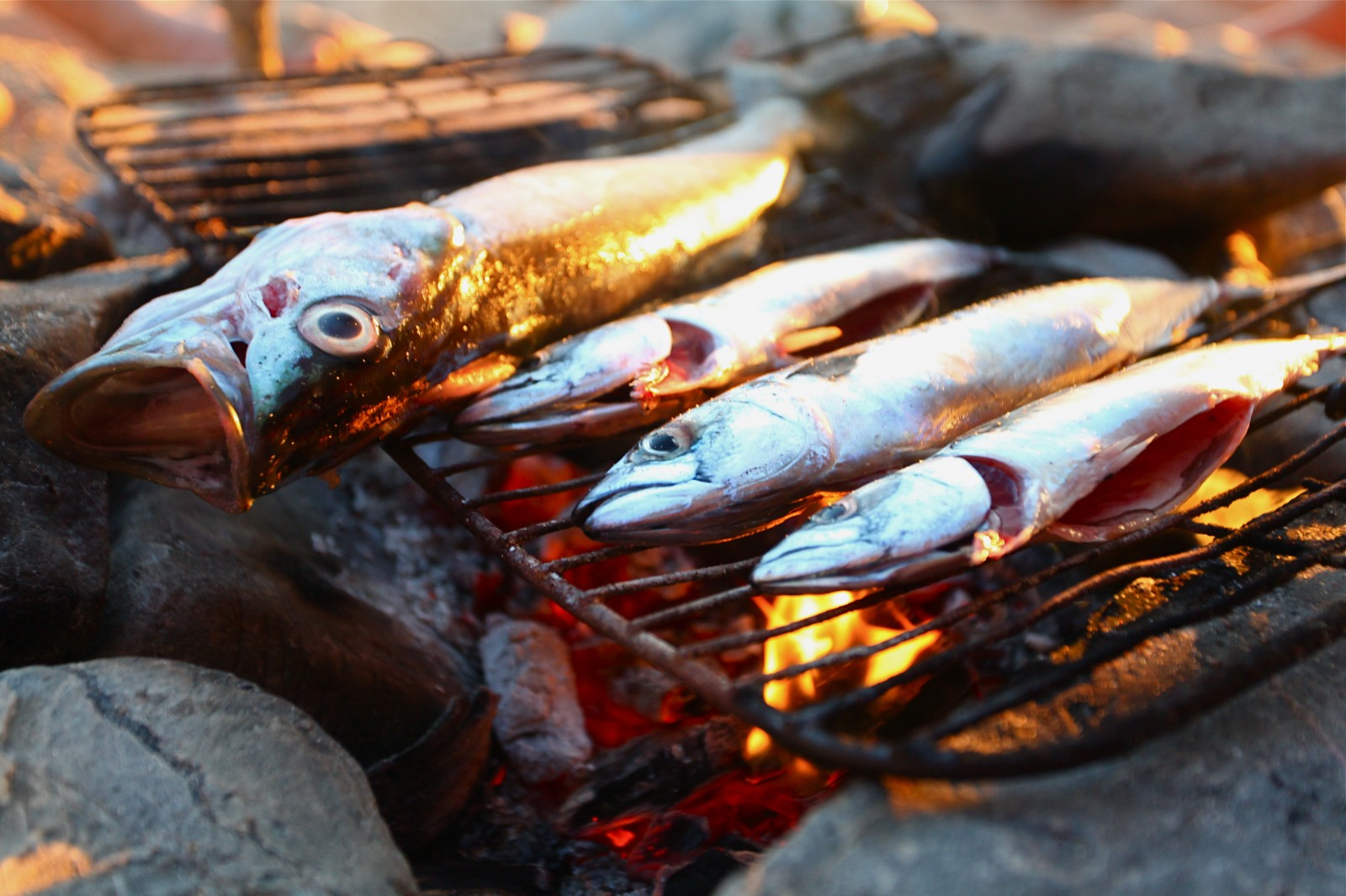 God surprises us with new beginnings and possibilities for Fish on fire